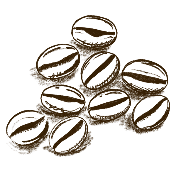 sketch of coffee beans
