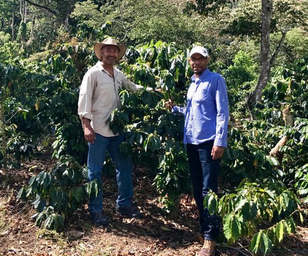 Felton and Al at the coffee farm next to coffee plants